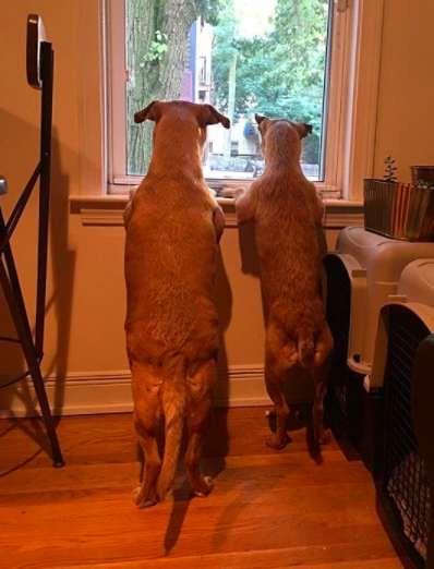Perro-conoce-a-su-gemelo4