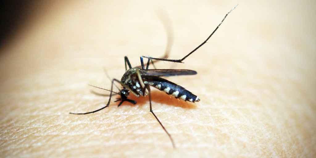 médicament-coupe-faim-moustique
