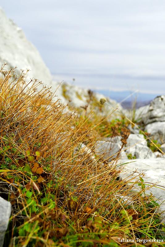 Трава, растущая на хребте