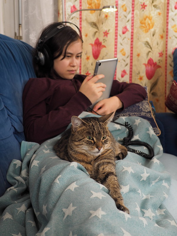 7e2_c140042-cat-on-girl