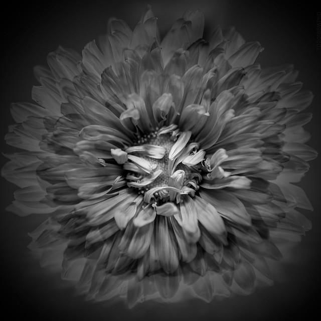 2018.11.20_324/365 - flower