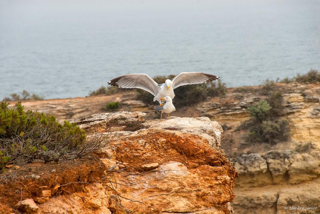 2012 - Algarve (Rota dos Sete Vales Suspensos) 203