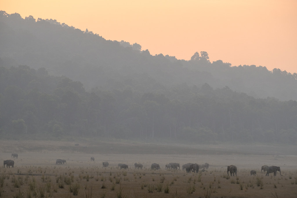 Good Night, Elephants | Dhikala, Jim Corbett NP, India