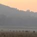Good Night, Elephants   Dhikala, Jim Corbett NP, India