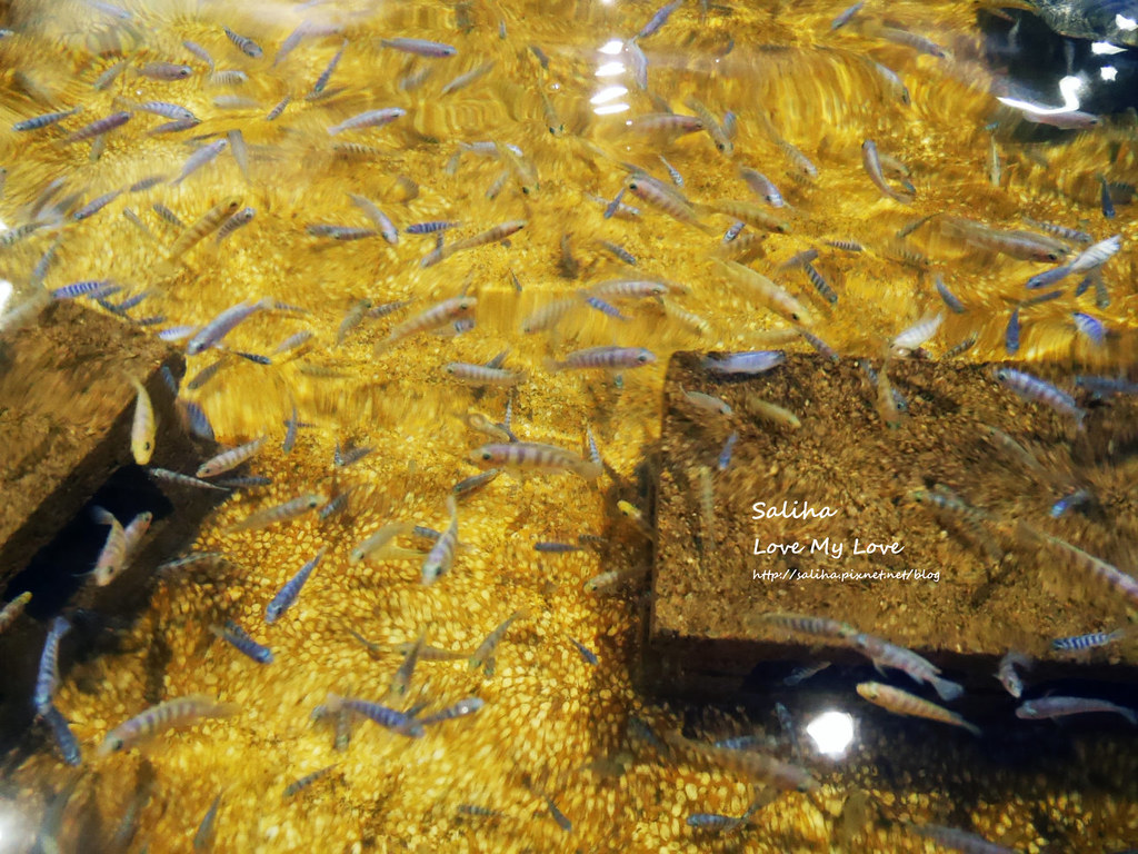 宜蘭礁溪一日遊景點推薦礁溪湯圍溝重口味溫泉魚去角質 (16)