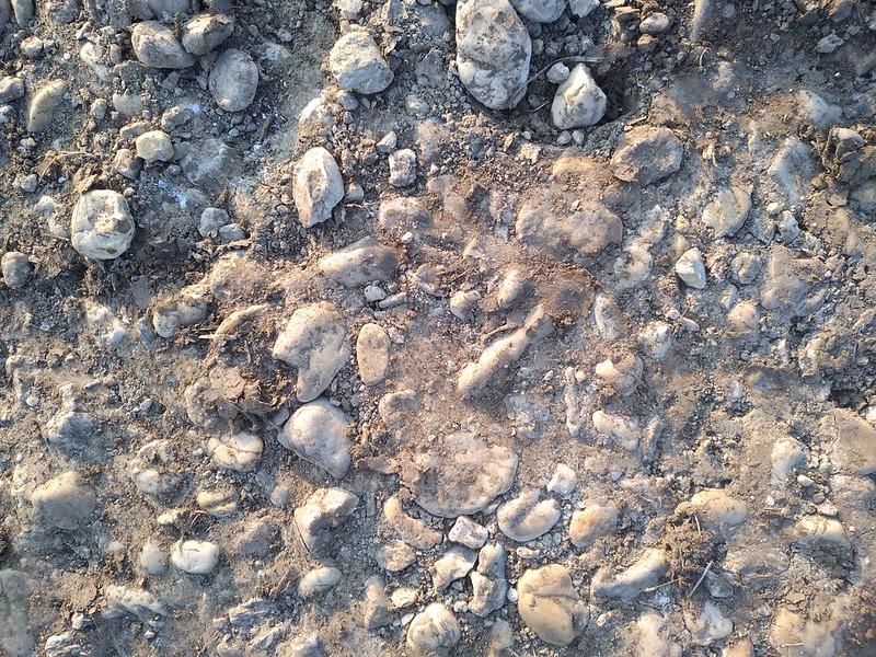 Ground Texture 9