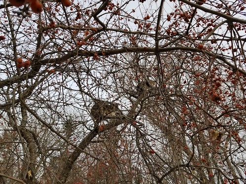 20181114.tree.fruit