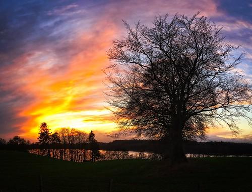 Sonnenuntergang mit Bäumen und See - Belau - Schleswig-Holstein - Deutschland