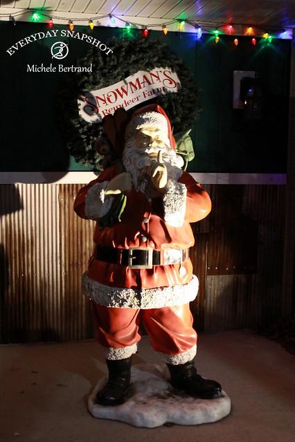 Reindeer 15