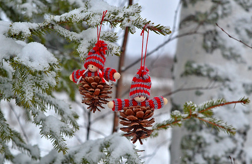 A bit of color in a cloudy day. 🎄⛄🎄 Christmas fir cones 😉