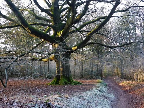 Wintermorning in Rijsterbos, Gaasterland