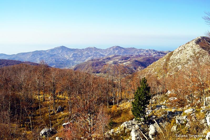 Вид на буковый лес и горы