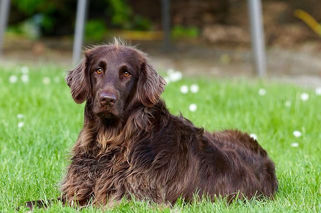 フィラリア予防を確実に行っている犬