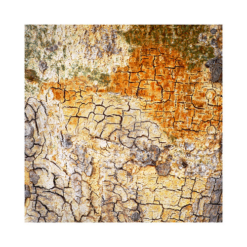 Tree detail Waterberg Namibia 2018.