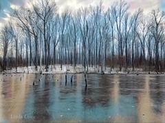 Frozen (Concord Woods)