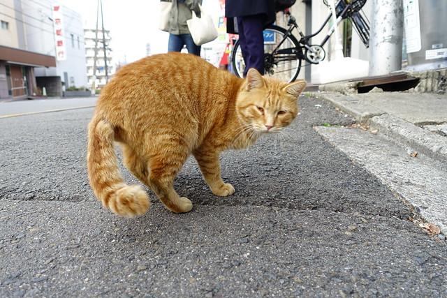 Today's Cat@2018-12-02