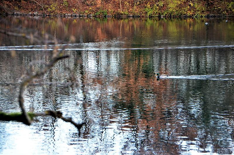 Ducks 24.11 (2)