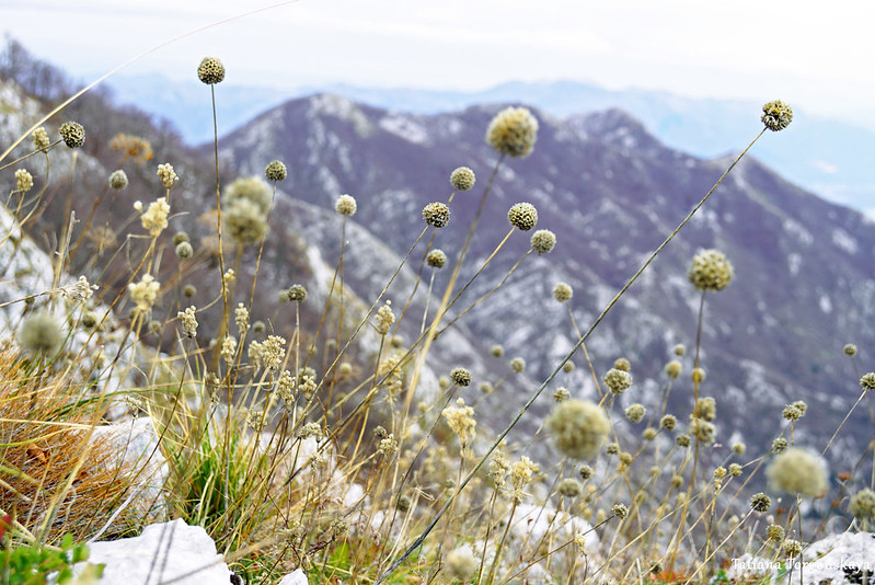 Сухие травы на хребте
