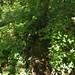 Notton Wood Nature Reserve (96)