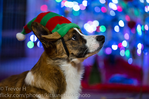 Christmas Corgi 3 | by Kenjis9965