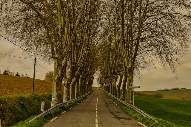 Proximos a Auragne, Languedoc Roussillon, Francia.