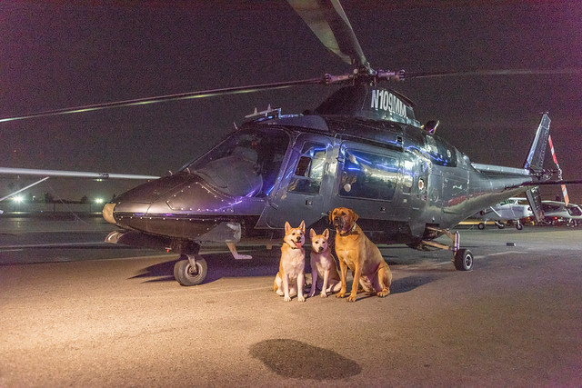 Ruff Cutz's Dogs Posing, Nikon D810, AF-S Nikkor 28-300mm f/3.5-5.6G ED VR