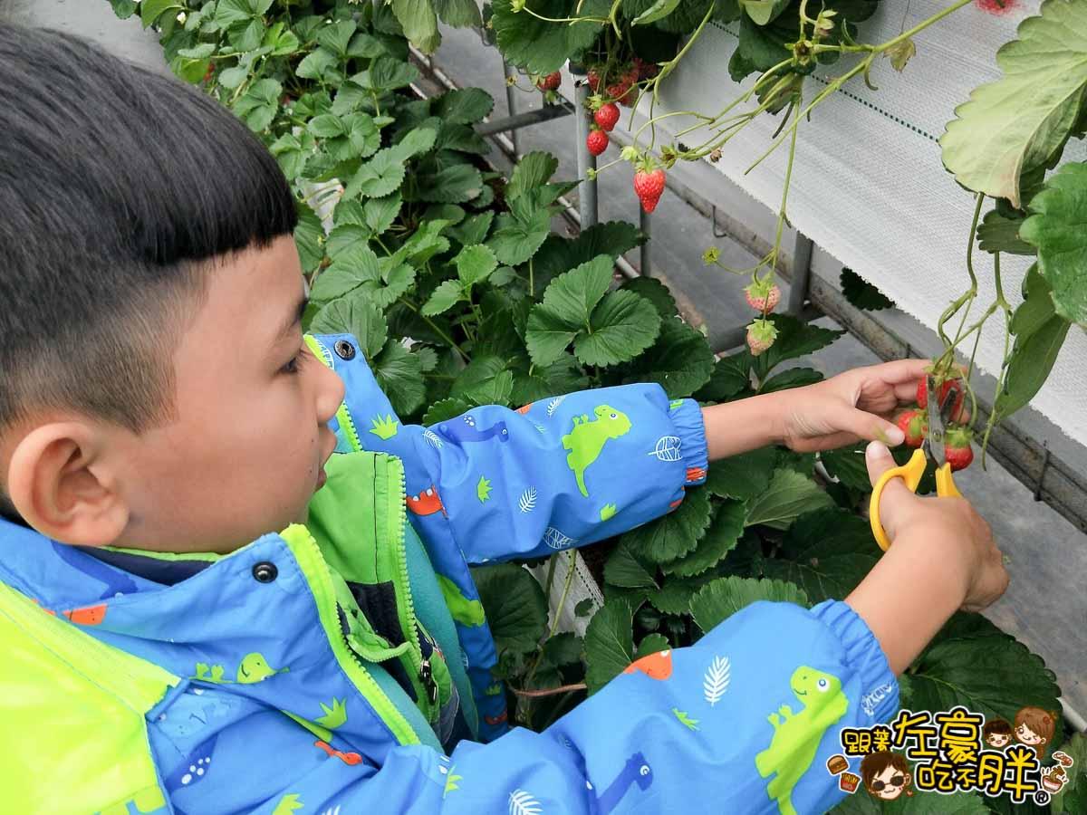 苗栗縣大湖灣潭玫瑰草莓園-29