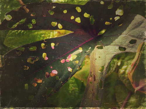 A chewed leaf in the Puerto Vallarta Botanical Garden, run through the photo app Stackables