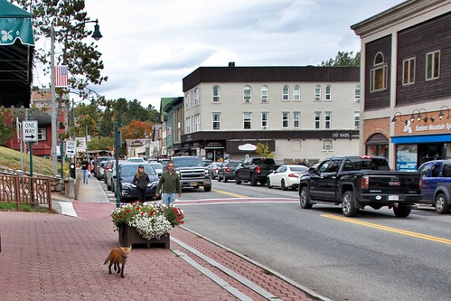 Lake Placid  New York - Main Street Commercial Area -- Wild Fox  Walking
