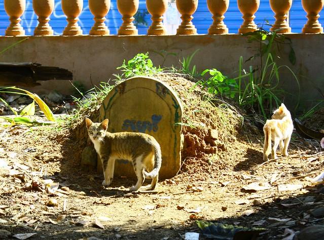 Battambang, 27/11/2009