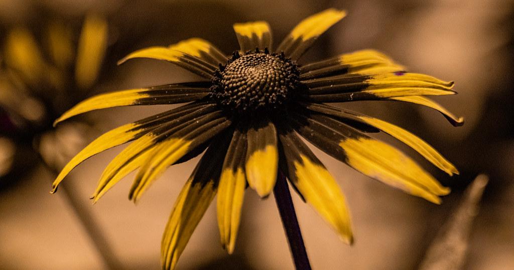 Flower UV_1