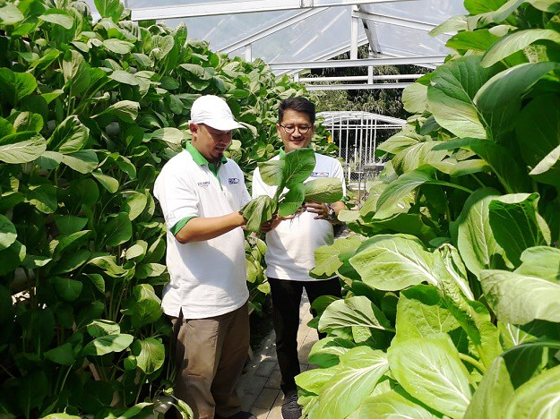 Kimia Farma Mewujudkan Kebun Gizi Hidroponik di Pondok Pesantren