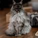 007 - cats cats cats- B9503850