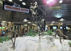 Ruth the Gorgosaurus and Othnelia rex