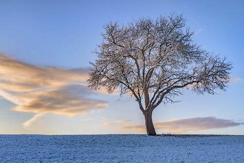 *winter tree*