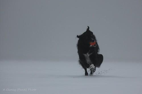 Foggy Devil Doggy