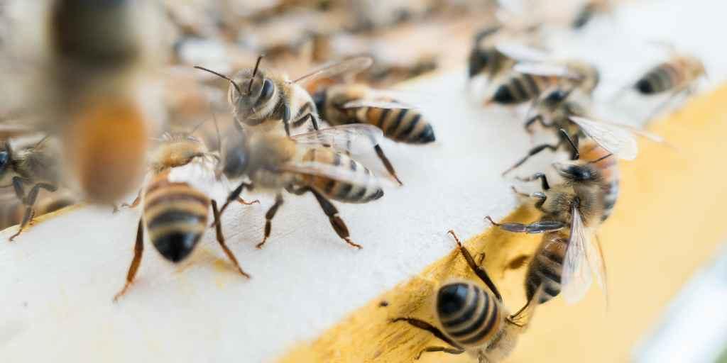 L'IA pour sauver les abeilles