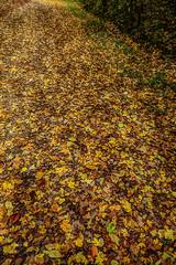 Moquette d'automne - Photo of Asnières-la-Giraud