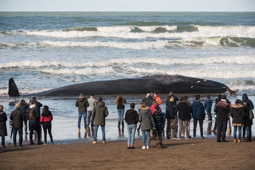 Balea Sopela