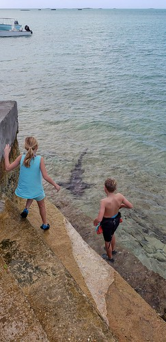 outisland galaxys9plus bahamas shark kids staniel cay
