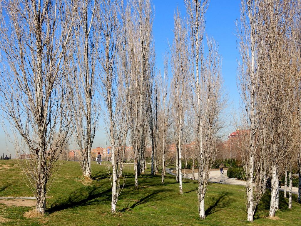 Paseos por Madrid-río