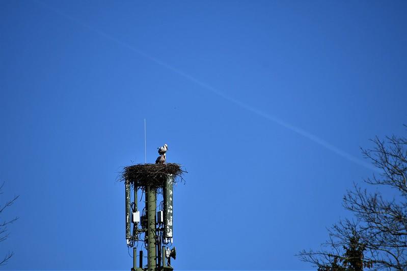 Stork Nest 16.03 (3)