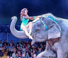 Showmen's Circus - Riverview, FL