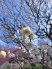Photo:19n6555 By kimagurenote