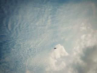319/365: soar (riding high)