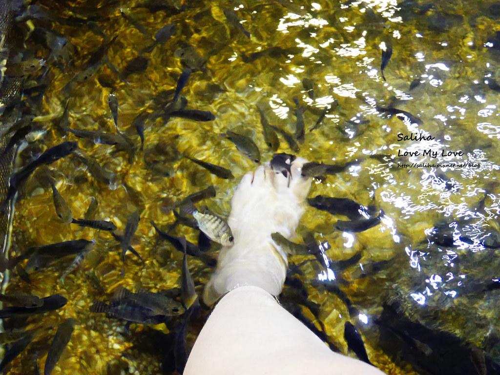 宜蘭礁溪一日遊景點推薦礁溪湯圍溝重口味溫泉魚去角質 (23)