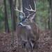 Deer Season!