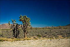 joshua-tree_arizona_panning_01_8779967528_o