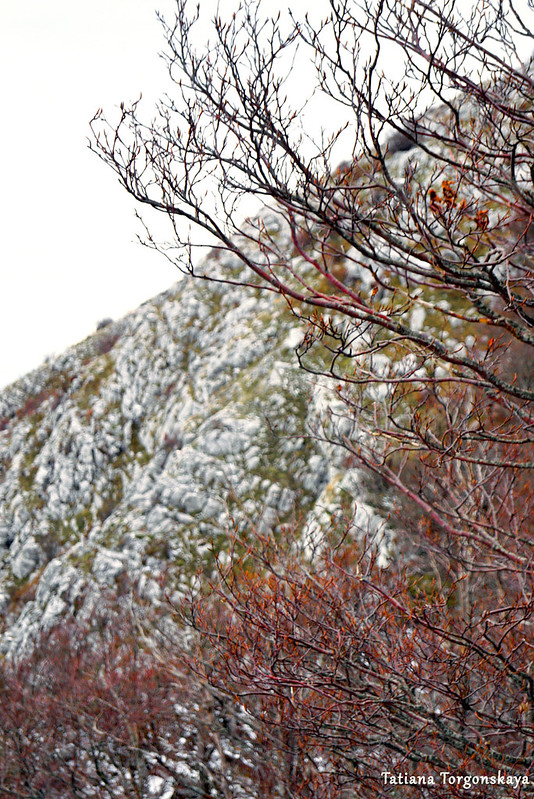 Вид на горный склон из-за буковых крон
