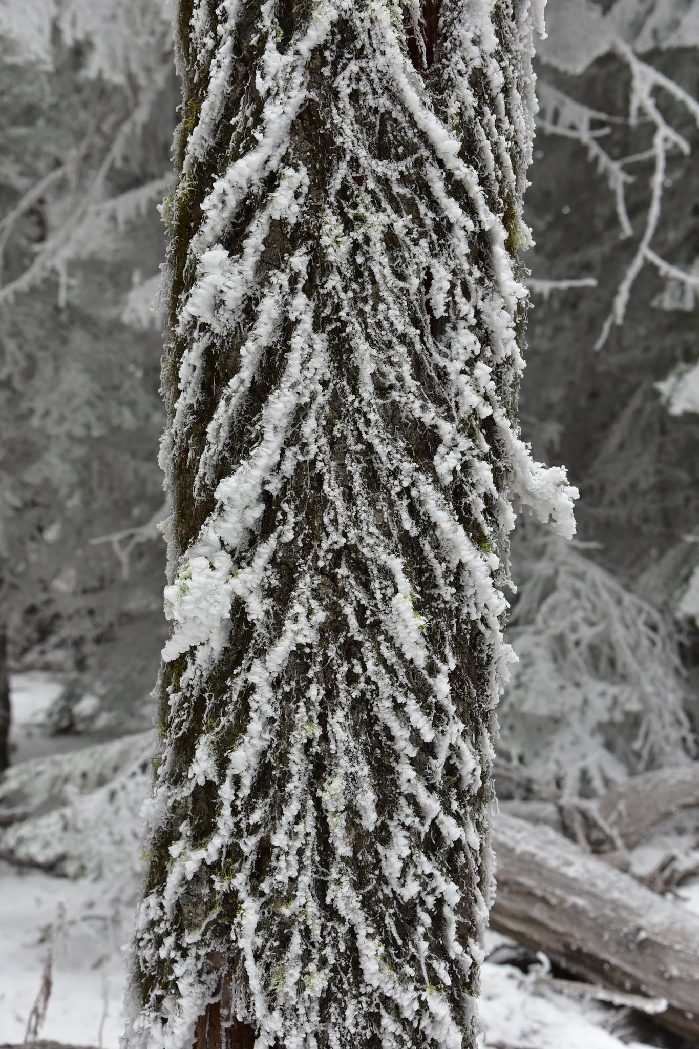 Wintery hike